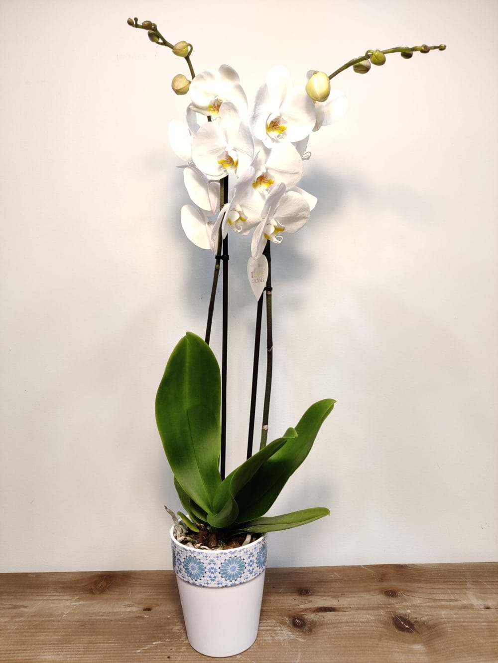 orquidea macetero