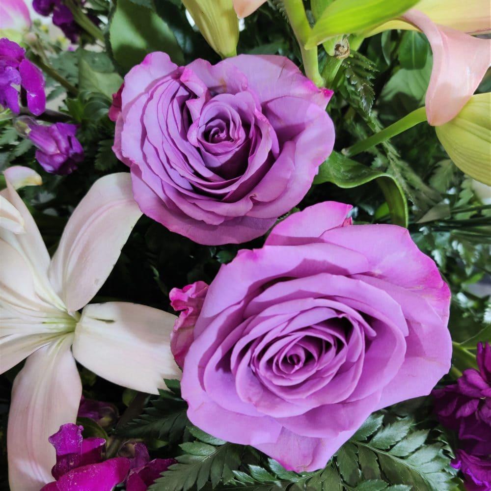 rosa centro variado