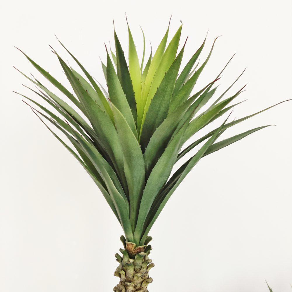 yucca verde